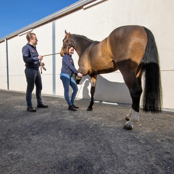 Sport Horse Clinic, Frank Van Hoeck, Willem Verhaeghe, Marie-Stéphanie Delheid Sport Horse Clinic - Lille 2021 © Hippo Foto - Dirk Caremans 29/03/2021